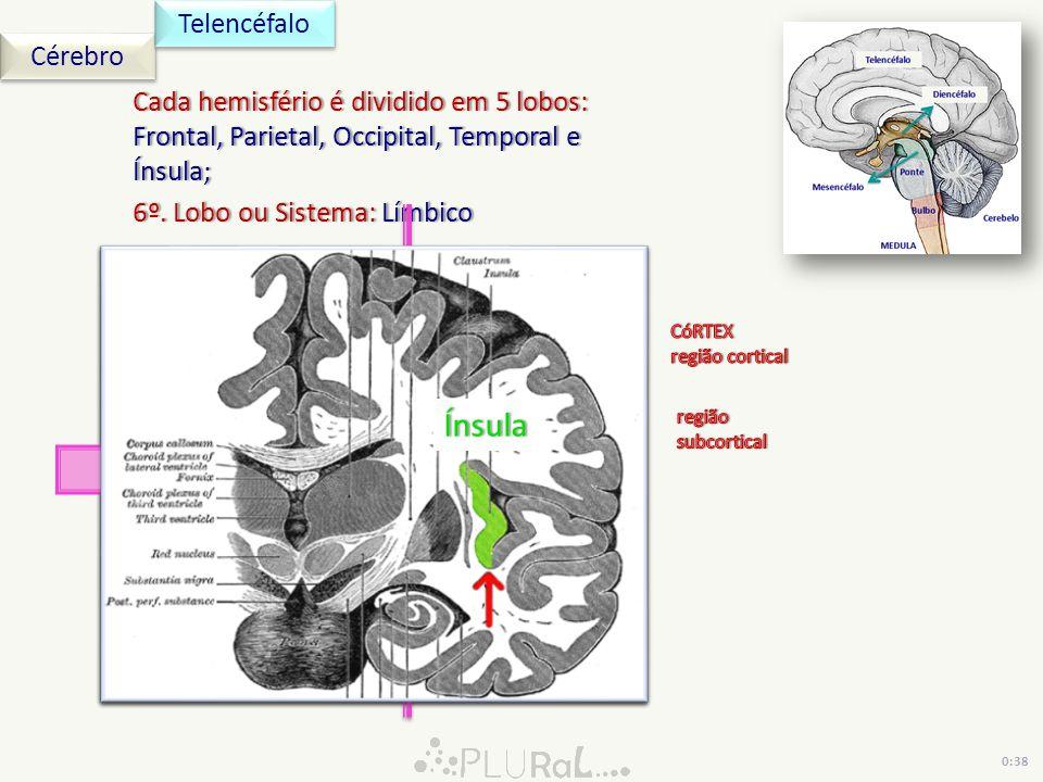 Ínsula Telencéfalo Cérebro