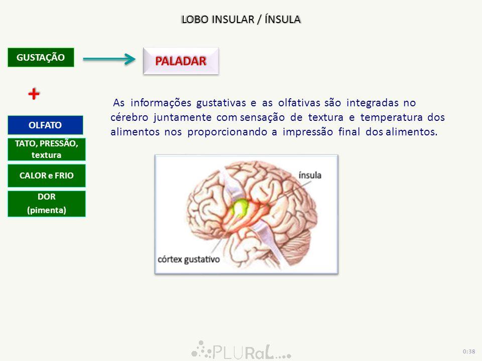 + PALADAR LOBO INSULAR / ÍNSULA