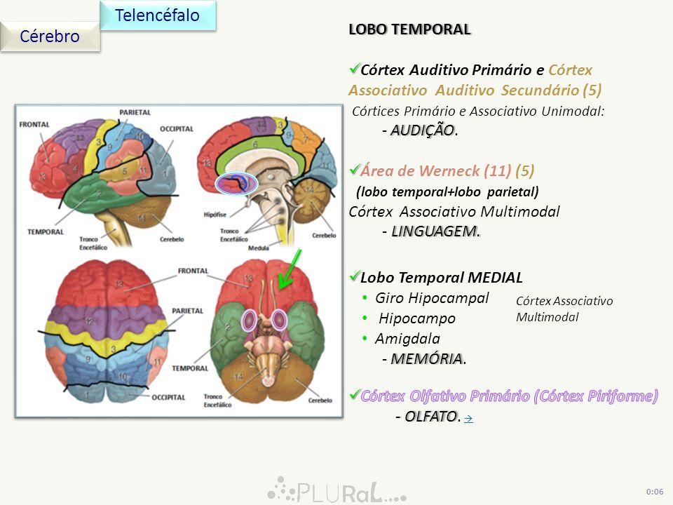 Telencéfalo Cérebro LOBO TEMPORAL