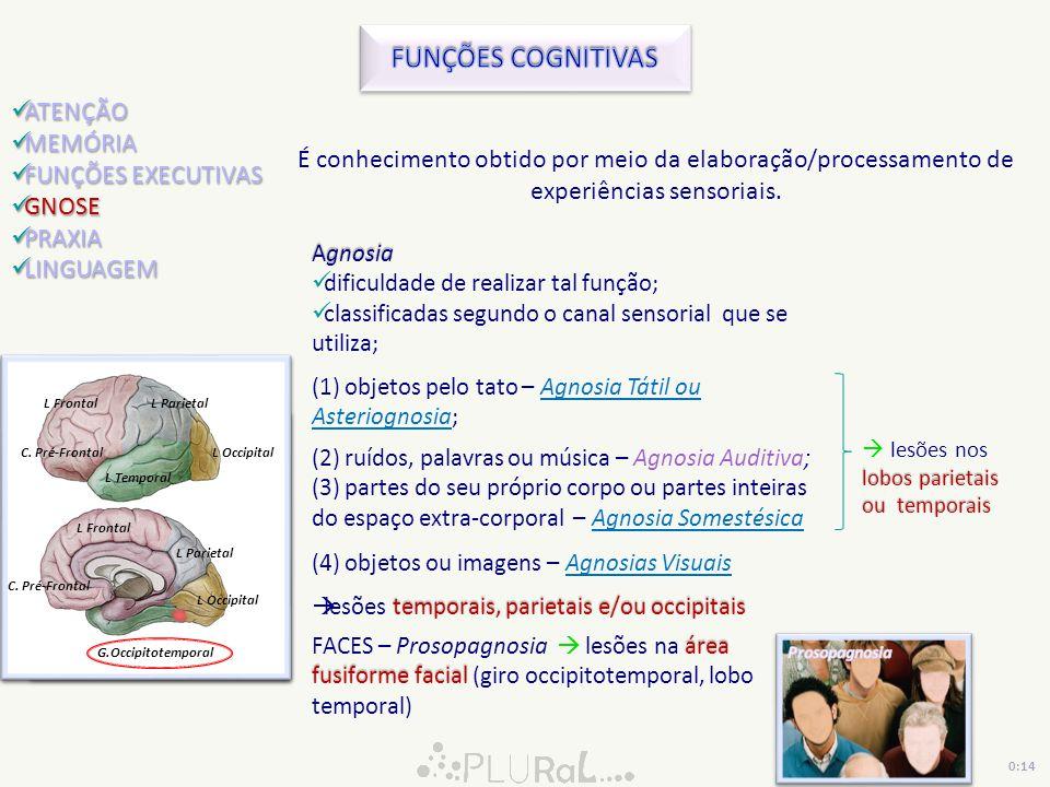 FUNÇÕES COGNITIVAS ATENÇÃO MEMÓRIA FUNÇÕES EXECUTIVAS GNOSE