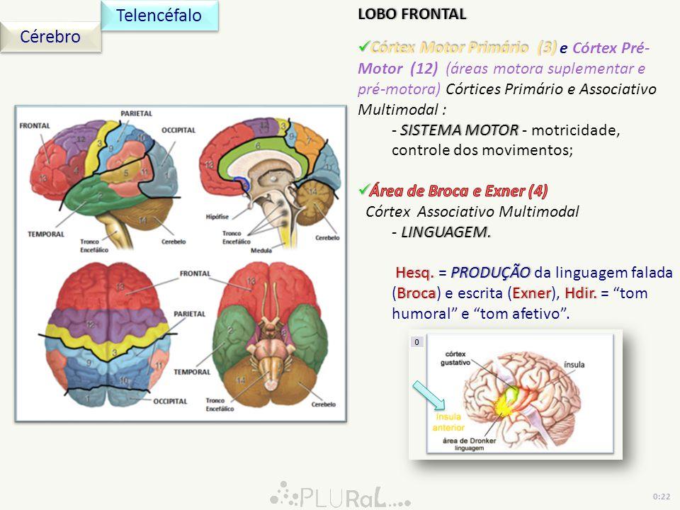 Telencéfalo Cérebro LOBO FRONTAL