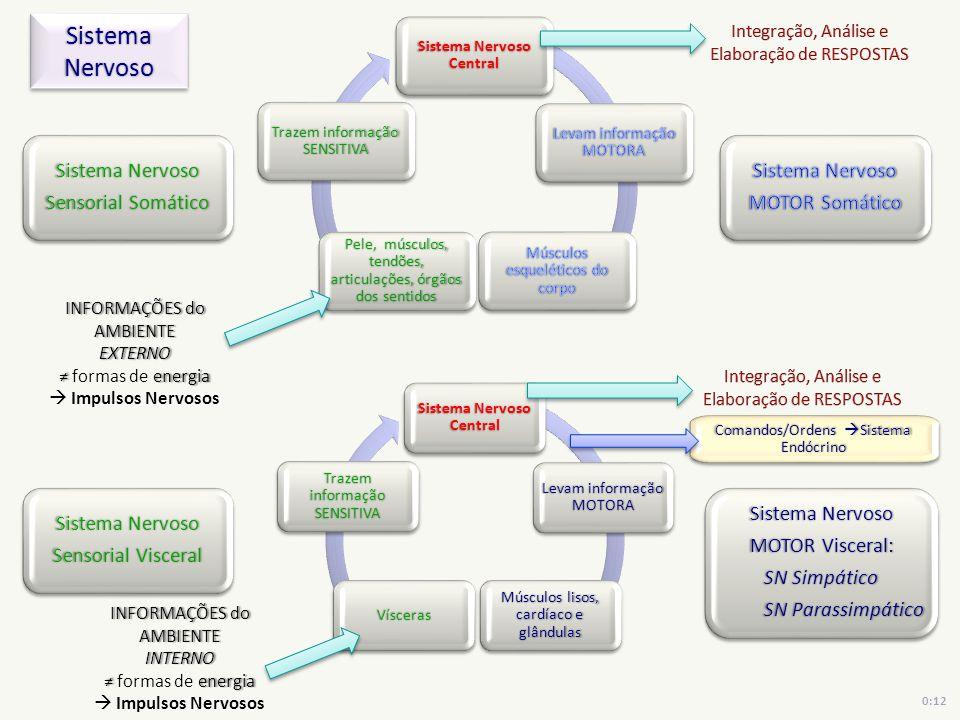Sistema Nervoso Central Sistema Nervoso Central