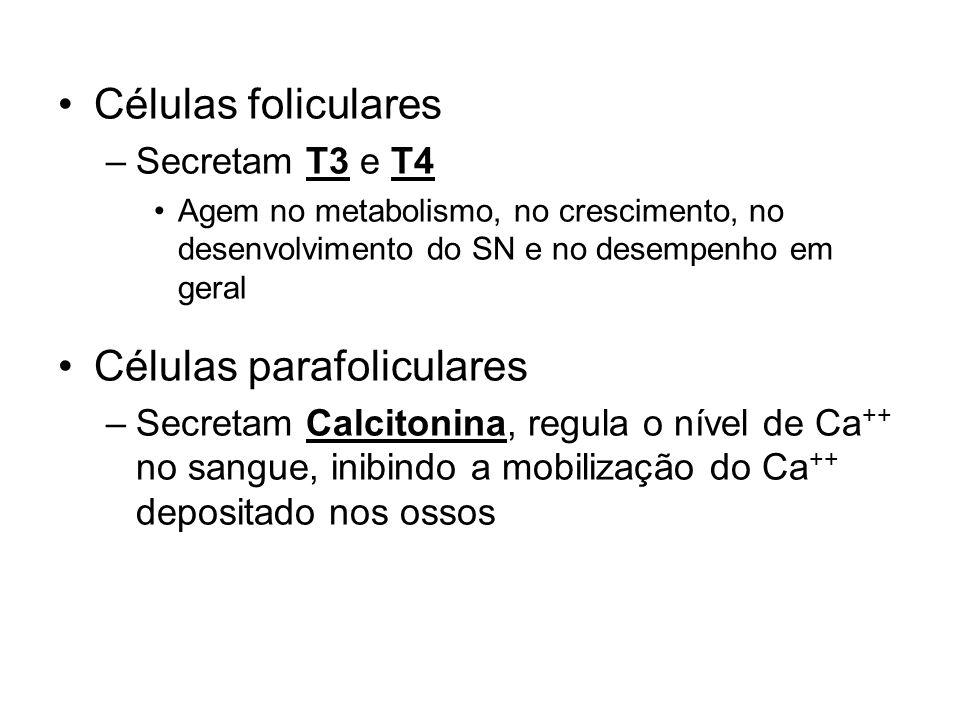 Tireóide Células foliculares Células parafoliculares Secretam T3 e T4