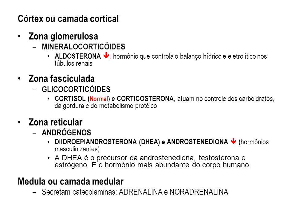 Córtex ou camada cortical Zona glomerulosa