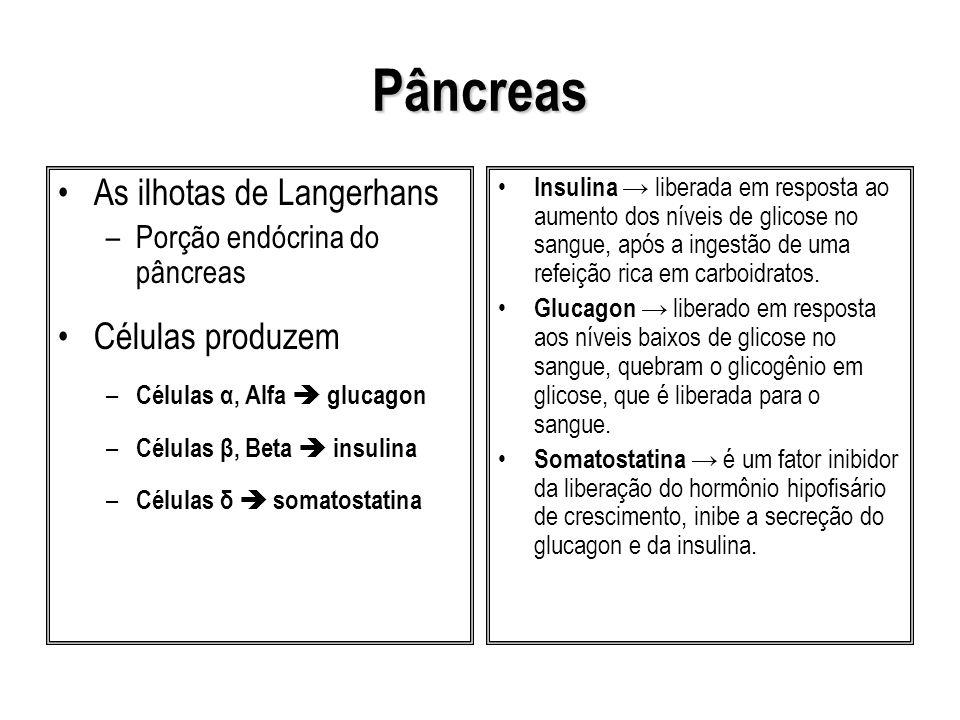 Pâncreas As ilhotas de Langerhans Células produzem