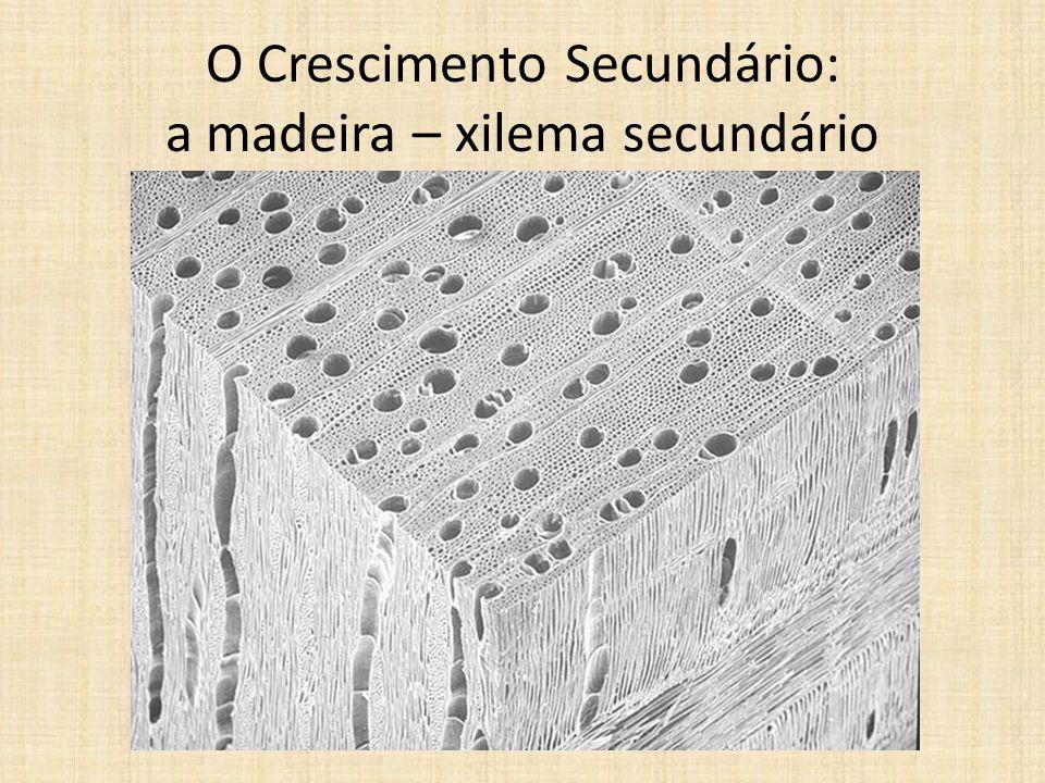O Crescimento Secundário: a madeira – xilema secundário