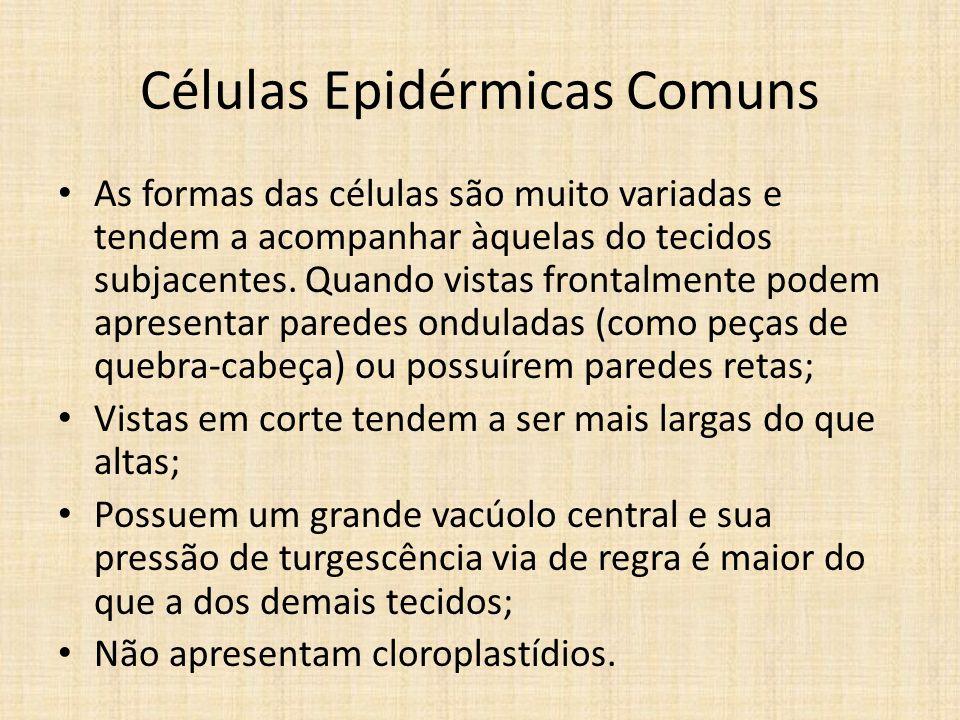 Células Epidérmicas Comuns