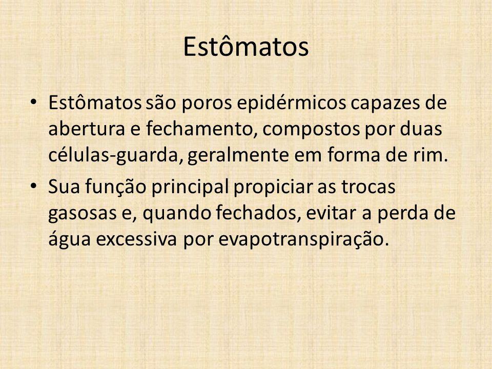 Estômatos Estômatos são poros epidérmicos capazes de abertura e fechamento, compostos por duas células-guarda, geralmente em forma de rim.