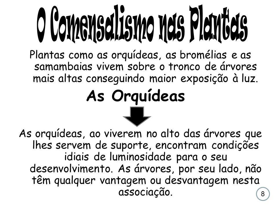 O Comensalismo nas Plantas