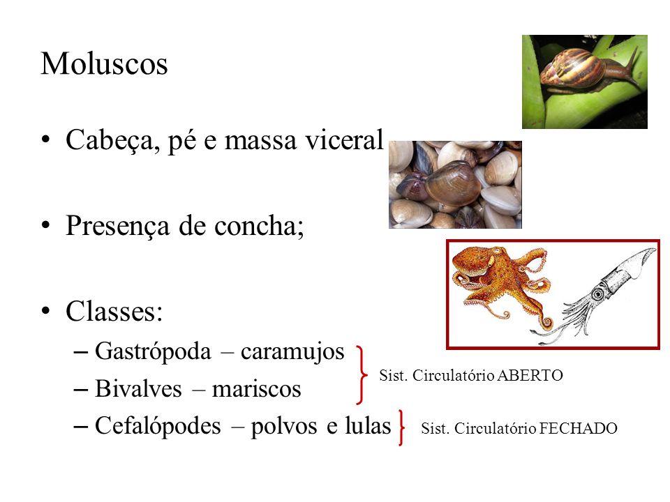 Moluscos Cabeça, pé e massa viceral Presença de concha; Classes: