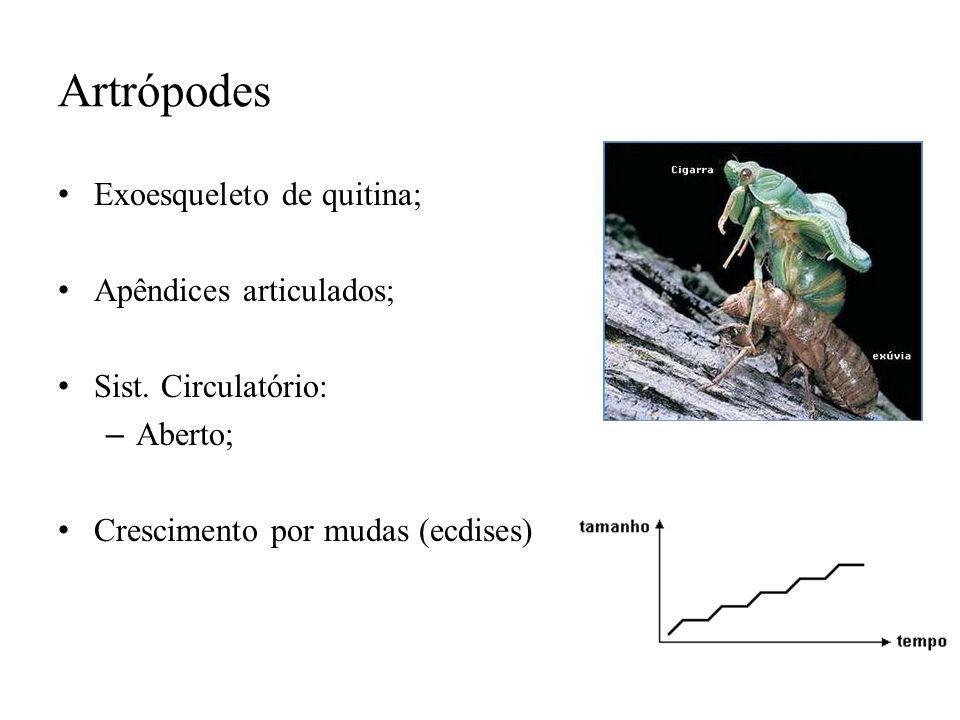 Artrópodes Exoesqueleto de quitina; Apêndices articulados;