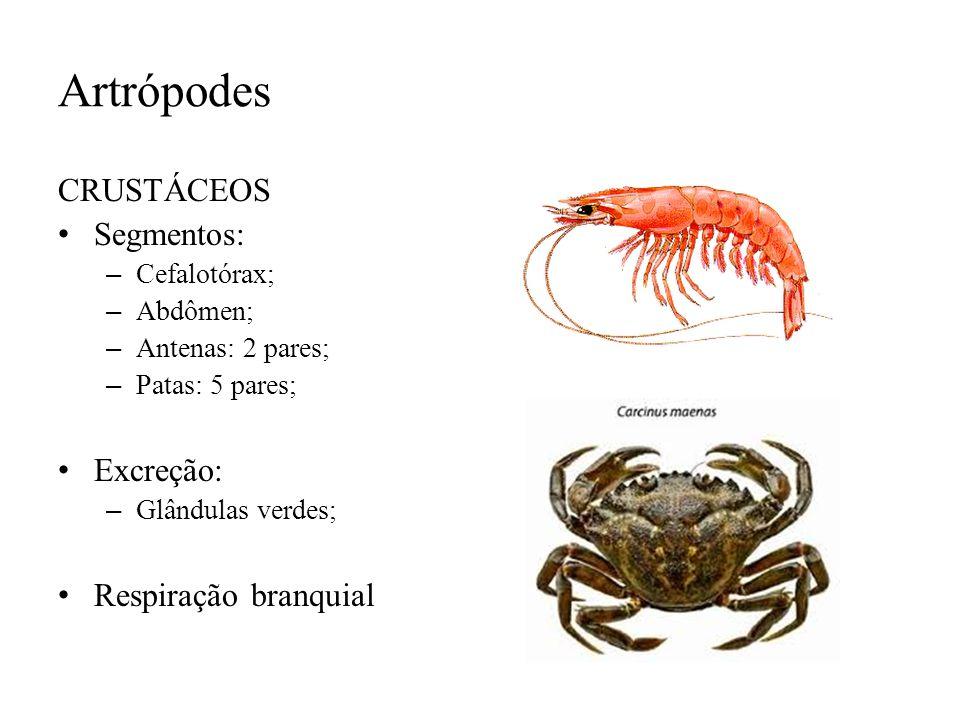 Artrópodes CRUSTÁCEOS Segmentos: Excreção: Respiração branquial