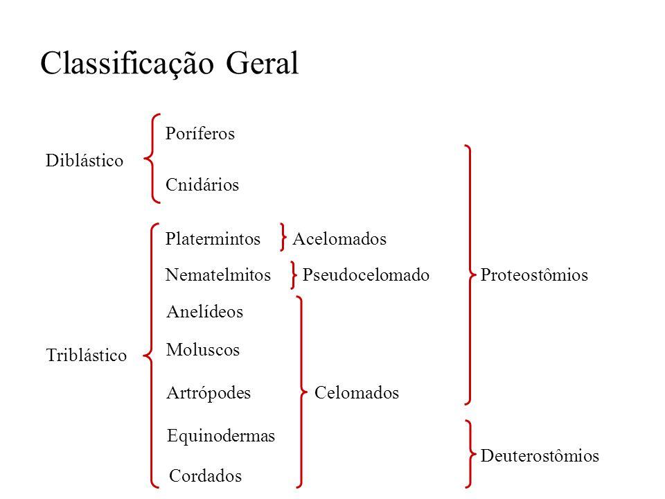 Classificação Geral Poríferos Diblástico Cnidários Triblástico