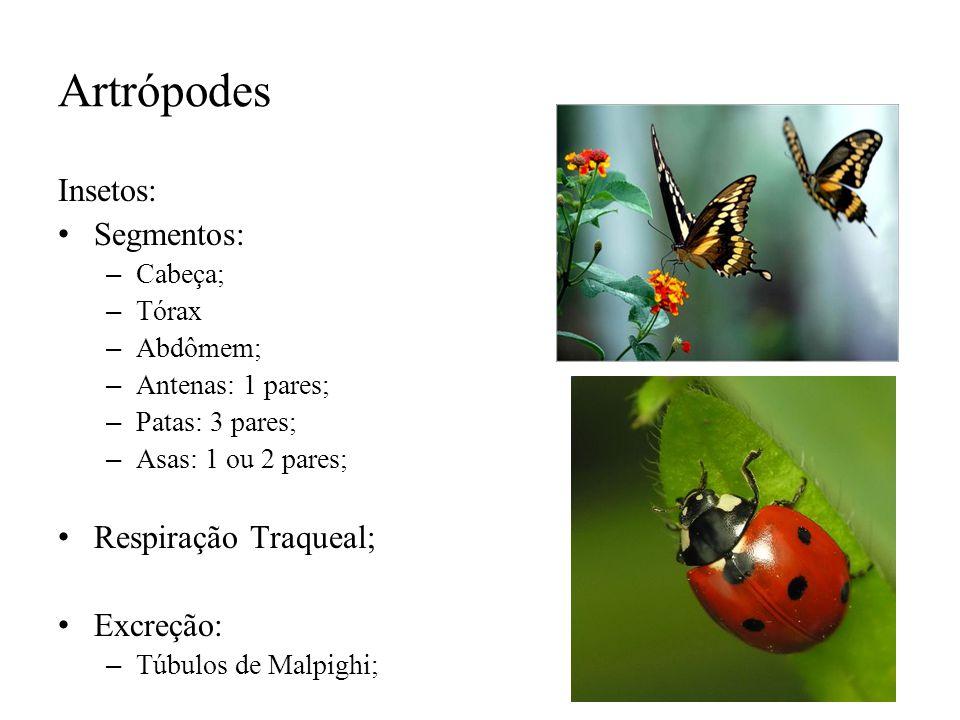 Artrópodes Insetos: Segmentos: Respiração Traqueal; Excreção: Cabeça;