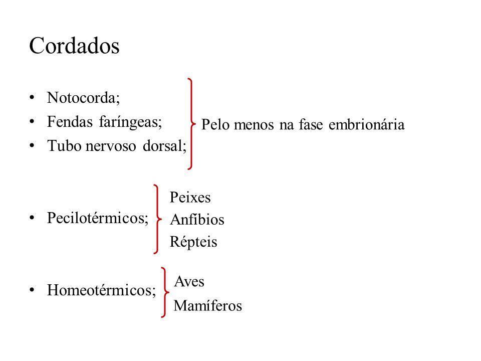 Cordados Notocorda; Fendas faríngeas; Tubo nervoso dorsal;