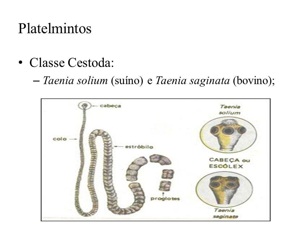 Platelmintos Classe Cestoda: