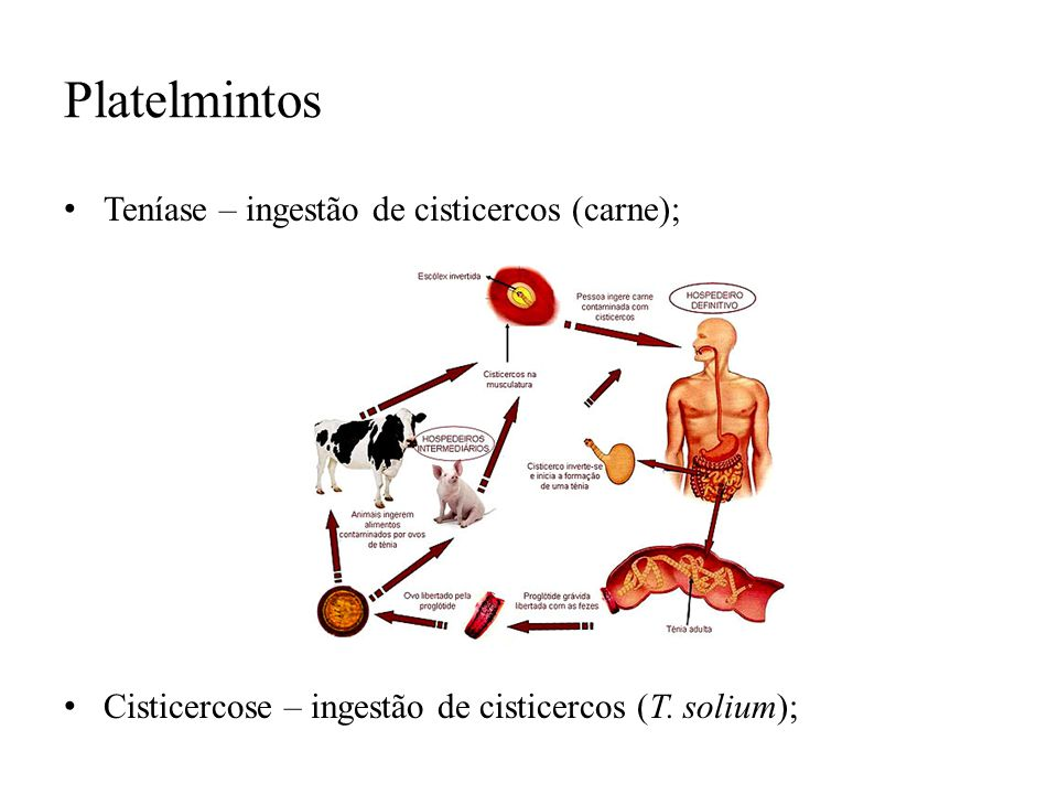 Platelmintos Teníase – ingestão de cisticercos (carne);