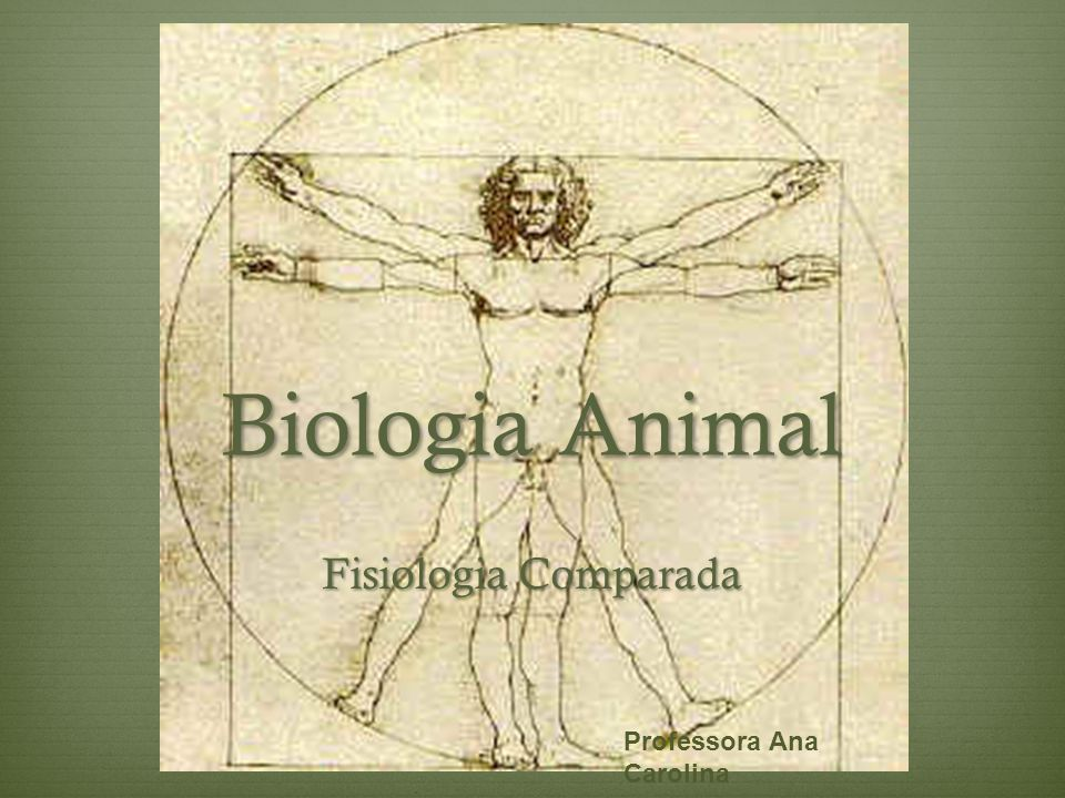 Biologia Animal Fisiologia Comparada Professora Ana Carolina