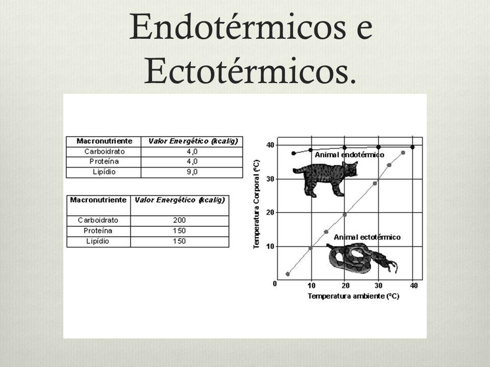 Endotérmicos e Ectotérmicos.