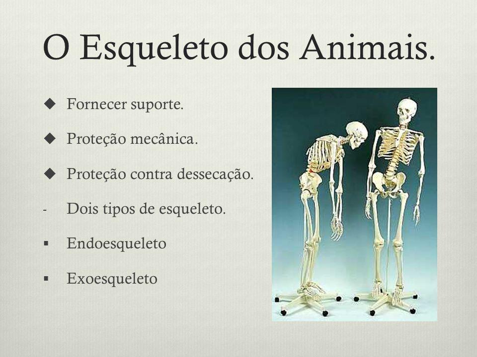 O Esqueleto dos Animais.