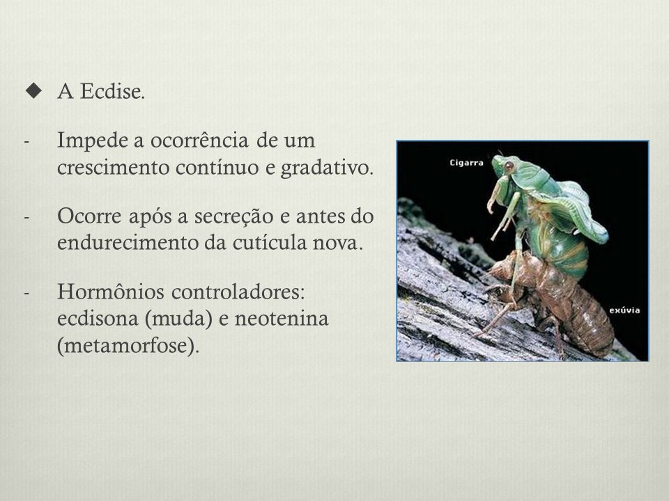 A Ecdise. Impede a ocorrência de um crescimento contínuo e gradativo. Ocorre após a secreção e antes do endurecimento da cutícula nova.