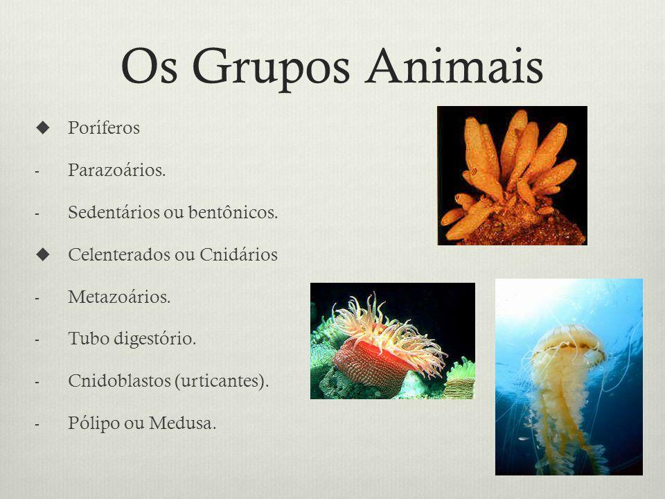 Os Grupos Animais Poríferos Parazoários. Sedentários ou bentônicos.