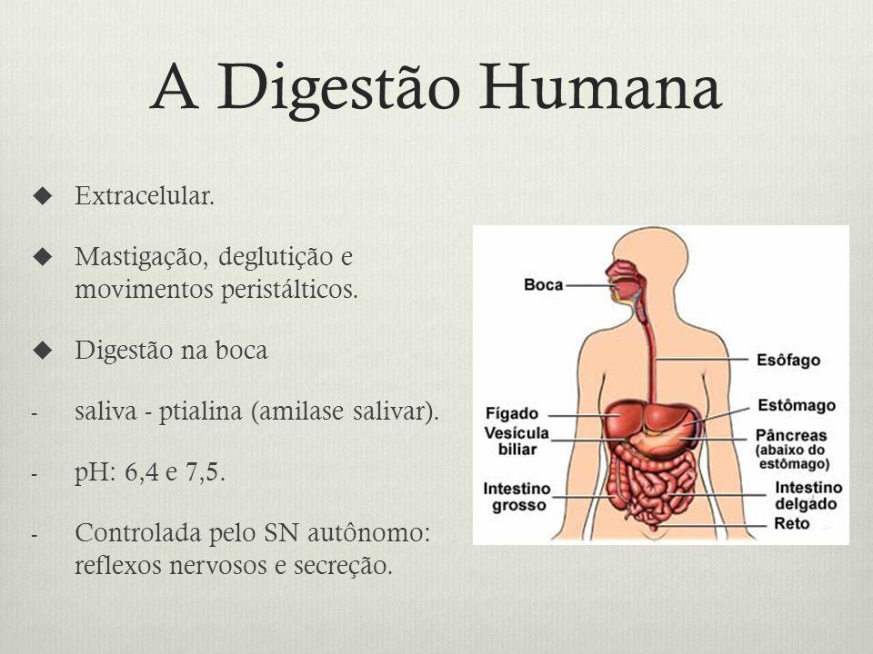 A Digestão Humana Extracelular.