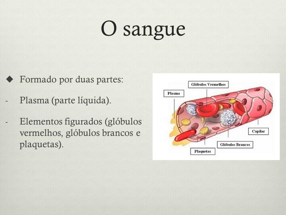 O sangue Formado por duas partes: Plasma (parte líquida).