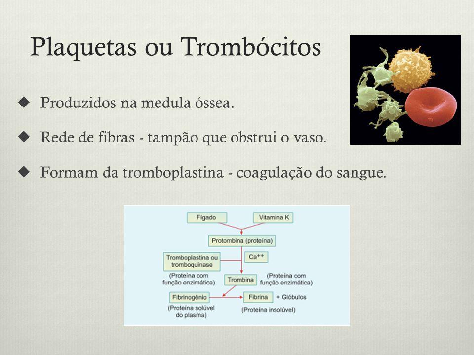 Plaquetas ou Trombócitos