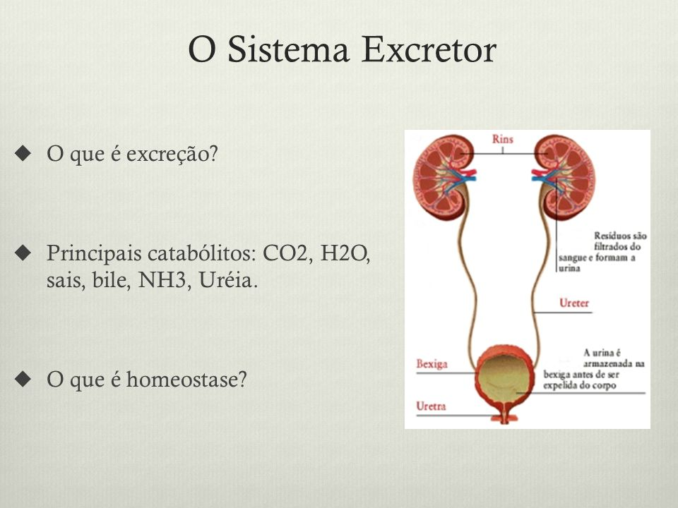 O Sistema Excretor O que é excreção