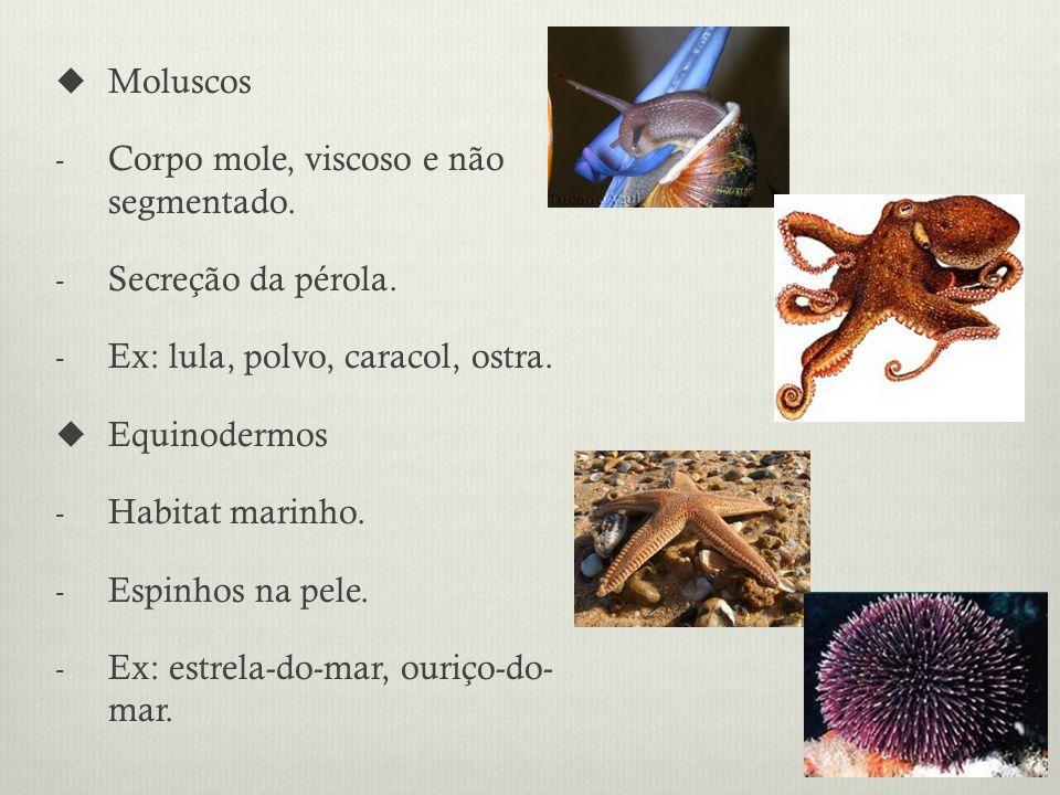 Moluscos Corpo mole, viscoso e não segmentado. Secreção da pérola. Ex: lula, polvo, caracol, ostra.