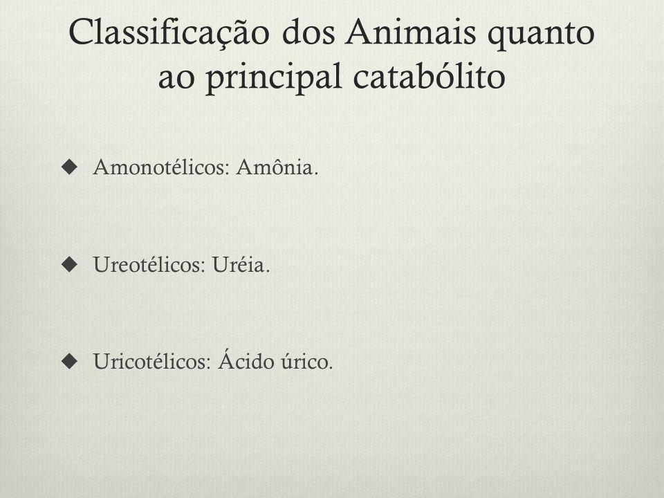 Classificação dos Animais quanto ao principal catabólito