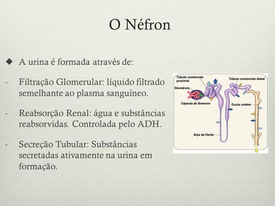O Néfron A urina é formada através de: