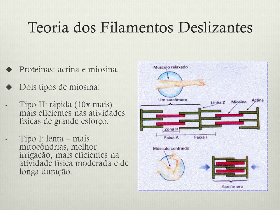 Teoria dos Filamentos Deslizantes