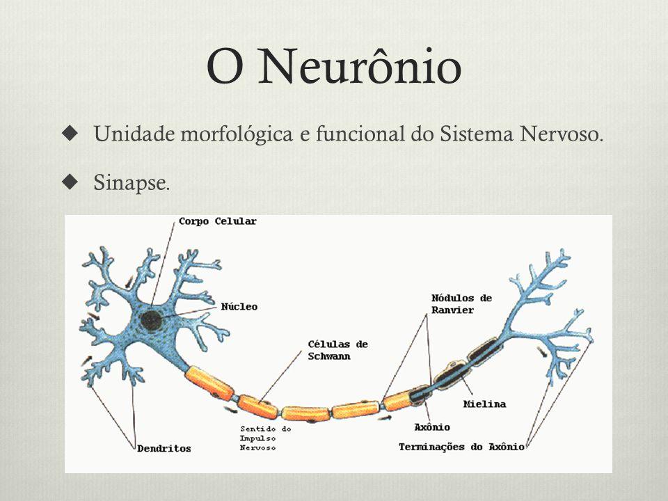O Neurônio Unidade morfológica e funcional do Sistema Nervoso.