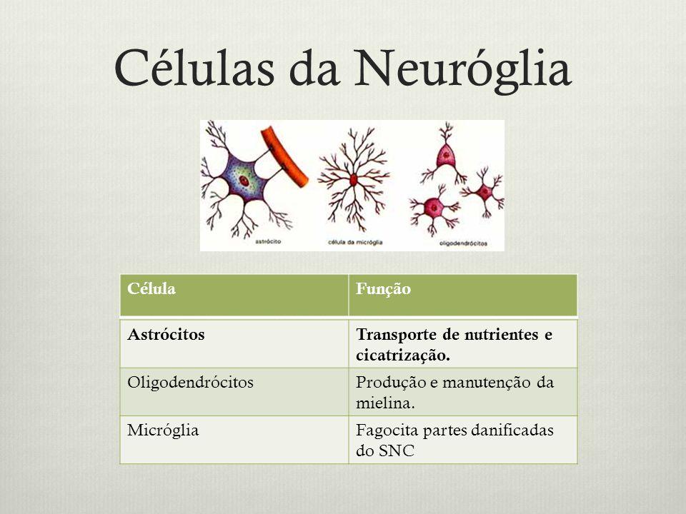 Células da Neuróglia Célula Função Astrócitos
