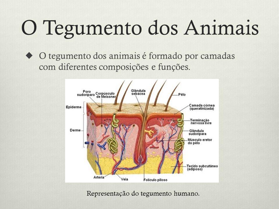 O Tegumento dos Animais