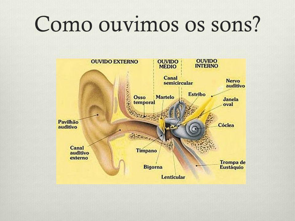 Como ouvimos os sons