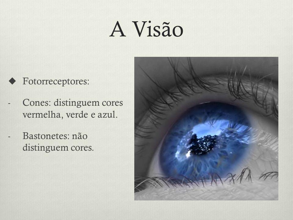 A Visão Fotorreceptores: