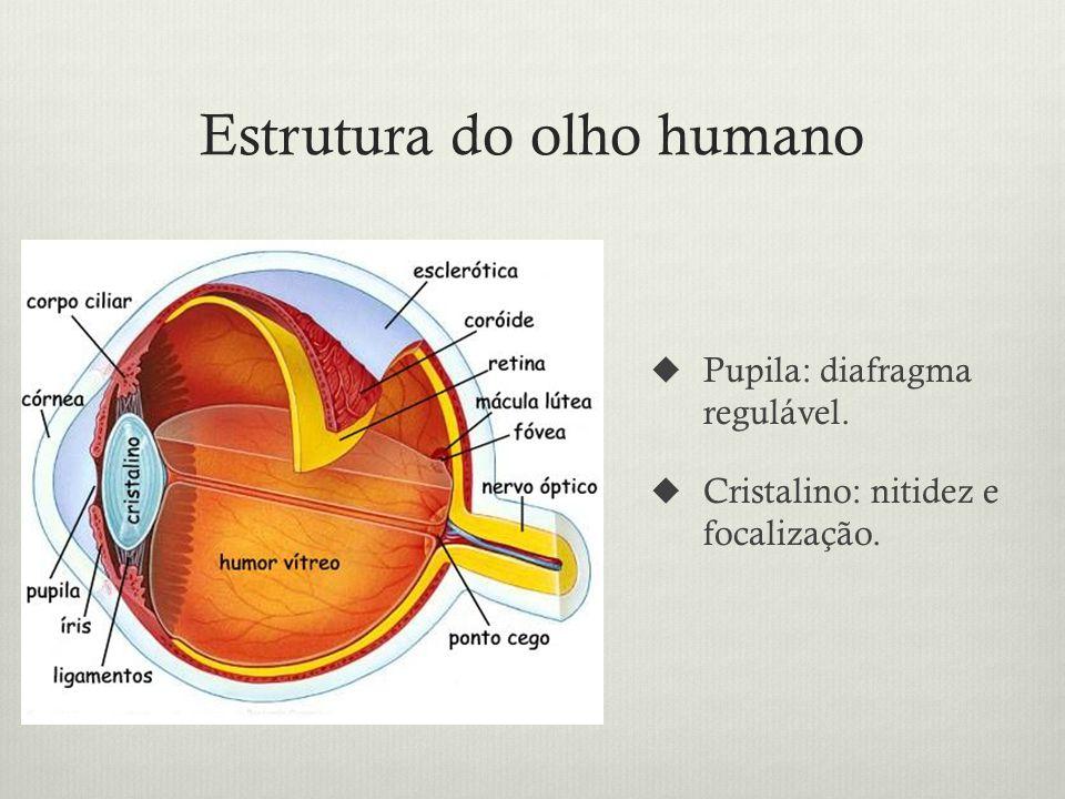 Estrutura do olho humano