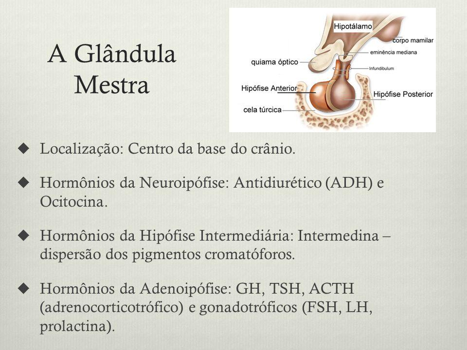 A Glândula Mestra Localização: Centro da base do crânio.