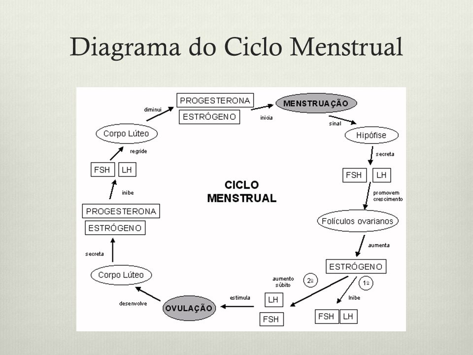 Diagrama do Ciclo Menstrual