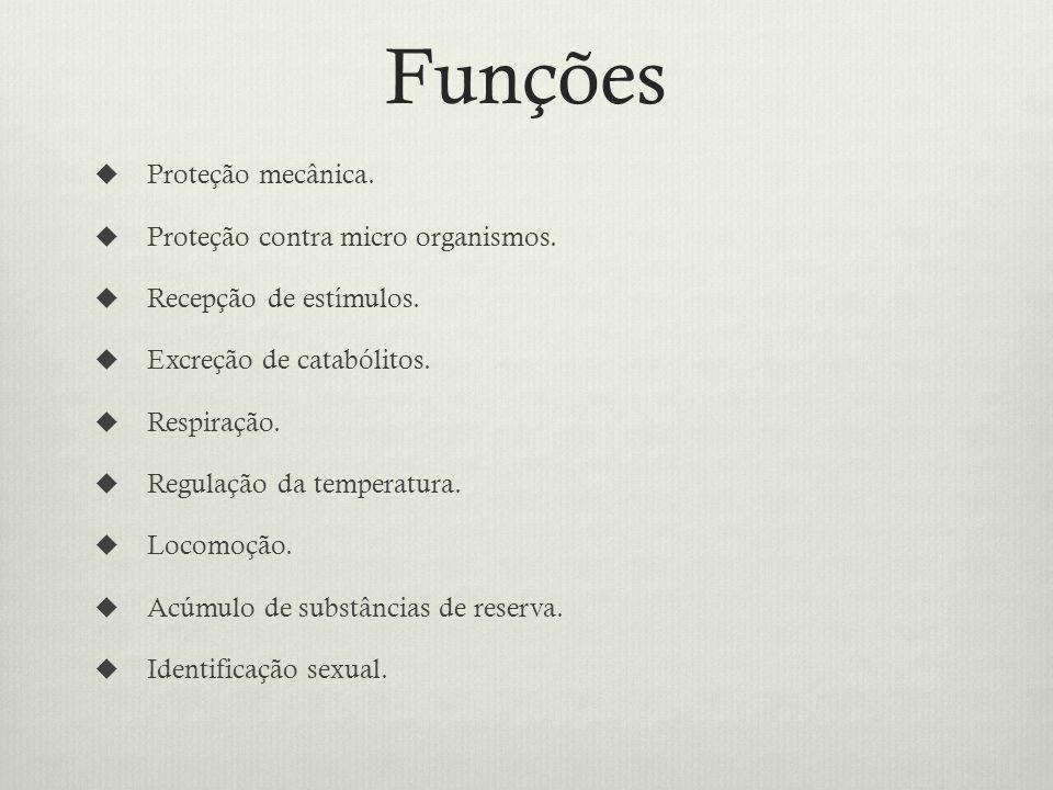 Funções Proteção mecânica. Proteção contra micro organismos.