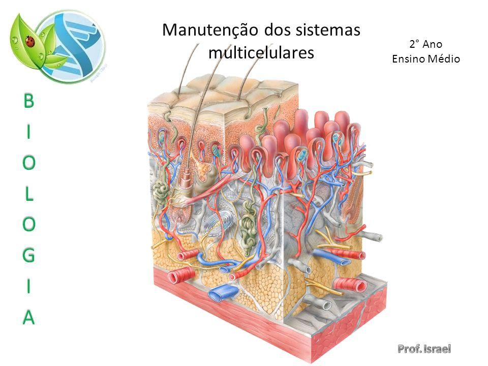 Manutenção dos sistemas multicelulares