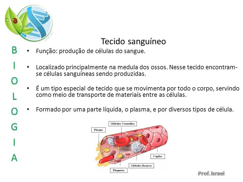 Tecido sanguíneo Função: produção de células do sangue.