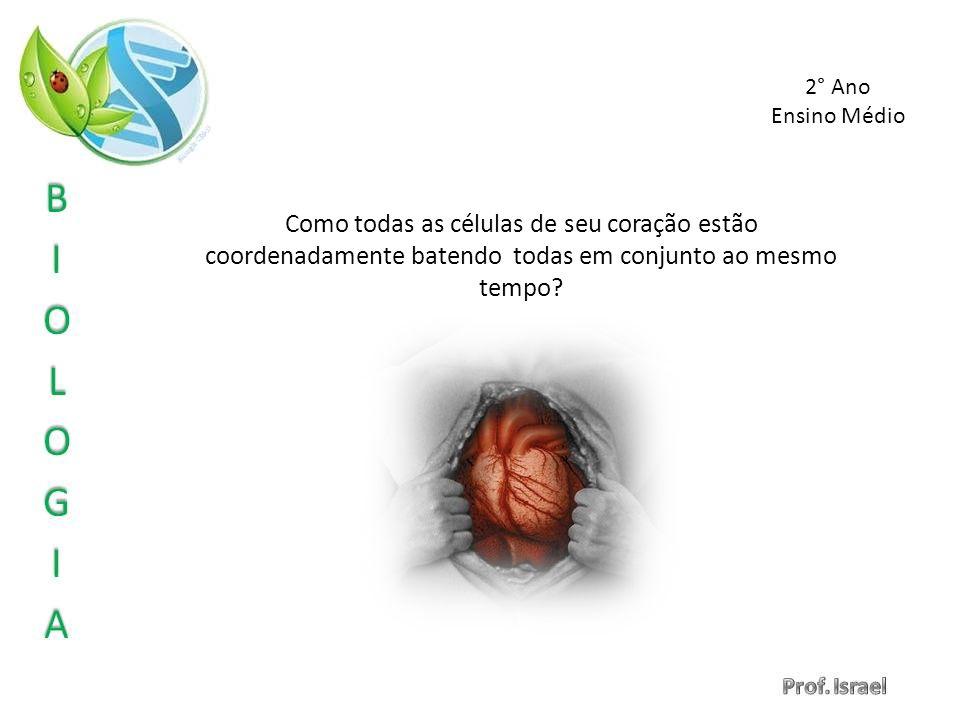 2° Ano Ensino Médio.