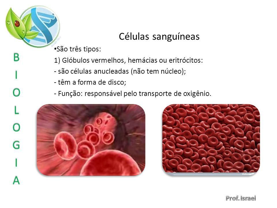 Células sanguíneas São três tipos: