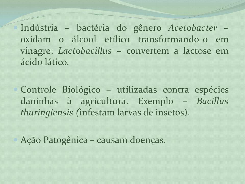 Indústria – bactéria do gênero Acetobacter – oxidam o álcool etílico transformando-o em vinagre; Lactobacillus – convertem a lactose em ácido lático.