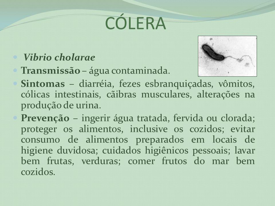 CÓLERA Vibrio cholarae Transmissão – água contaminada.