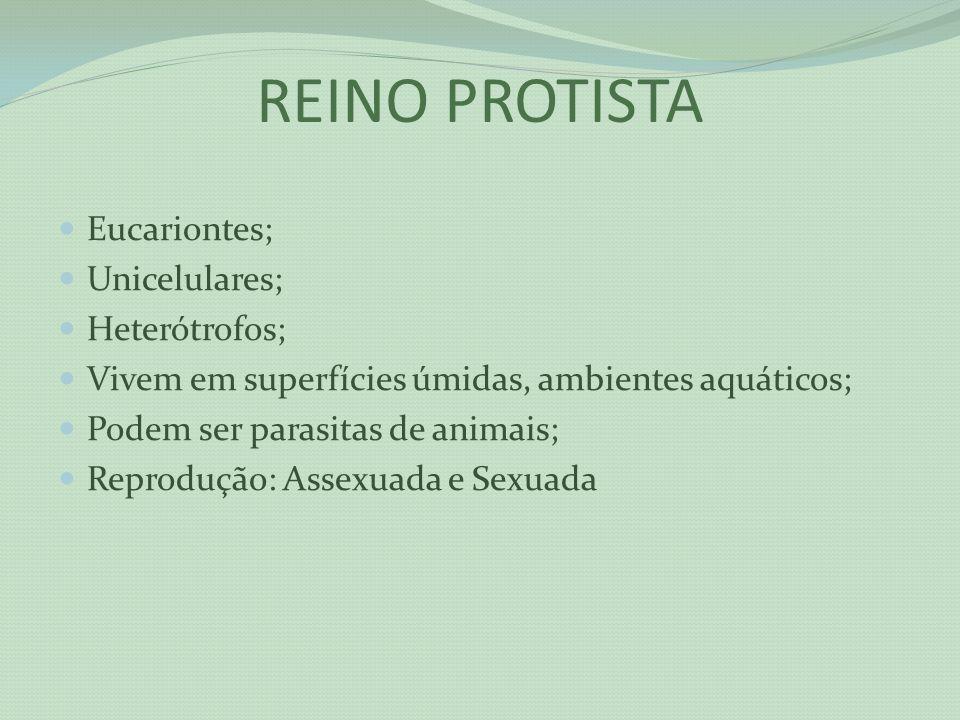 REINO PROTISTA Eucariontes; Unicelulares; Heterótrofos;
